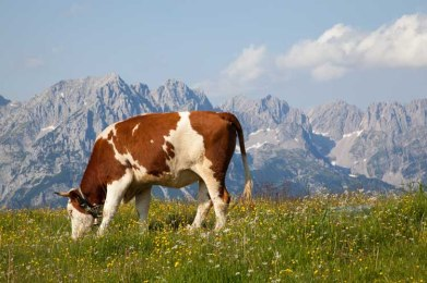 Alps03