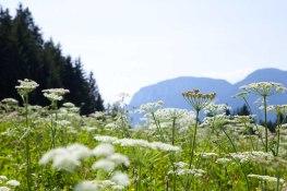 Alps07
