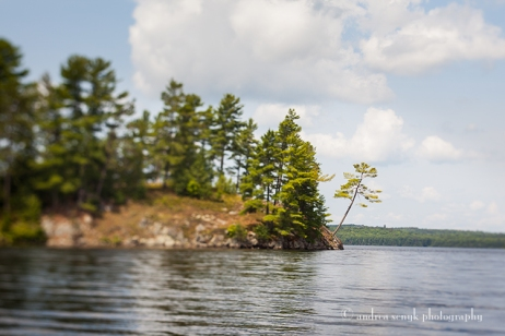 Algonquin Pine