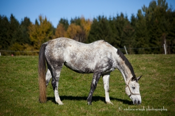 Country Horse 2