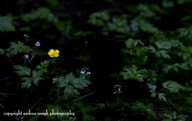 Forest Flower
