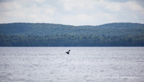 Lake Loon