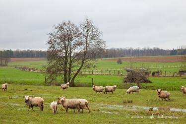 Loraine Landscape