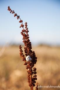 Snails Story