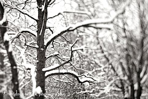 Snowy Dreams