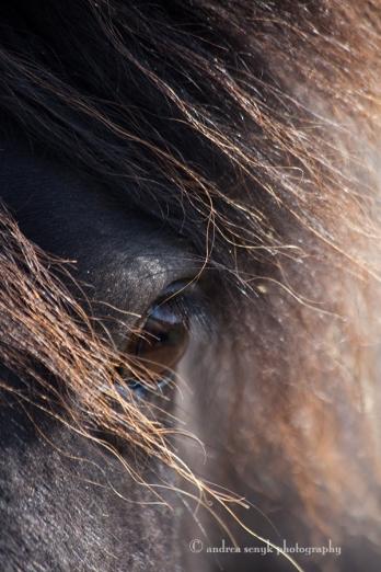Sunny Pony