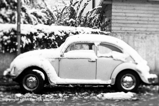 Cold Bug