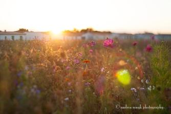 Evening Wildflowers