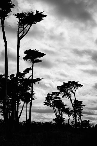 Island Trees