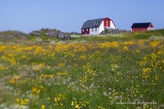 Meadows and Barns