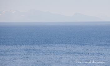Orca and Sea