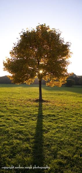 Sonnenblick