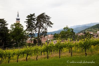 Treviso Vines