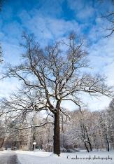 Winter Baum