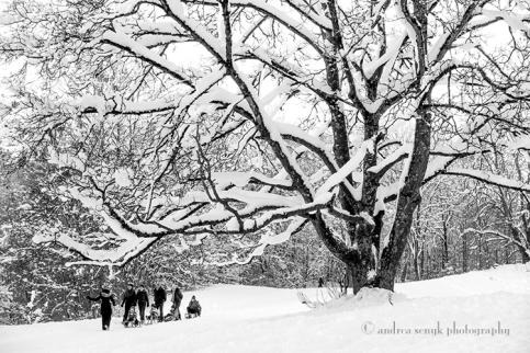 Winter Sleds