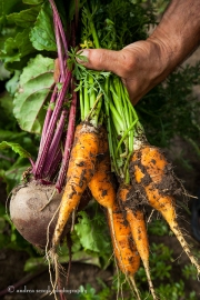 Root Veges