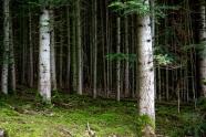 Algonquin Forest