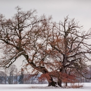 Benreid Baum