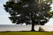 Clearville Oak