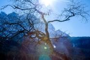 Eibsee Tree