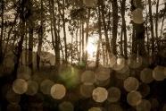 Forest Boquet