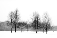 Group of Seven Winter BW