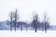 Group of Seven Winter