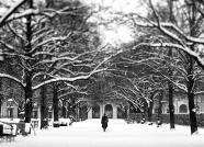 Hofgarten im Winter I