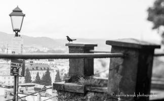 ©AndreaSenyk_1262